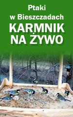 Kamera Karmnik - Ptaki Bieszczady
