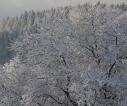 poczatek_zimy_2017_sanok_12
