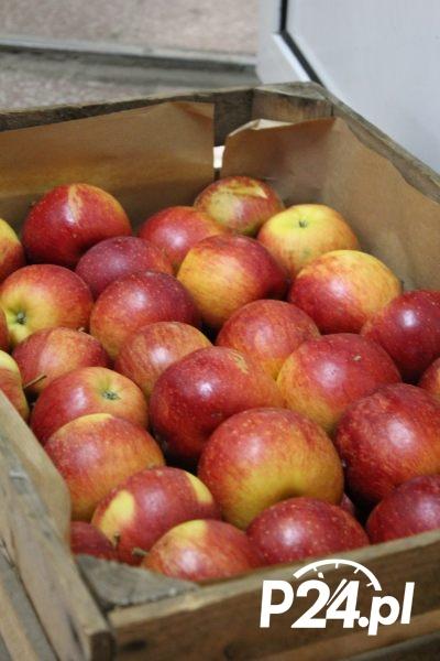 jablka008