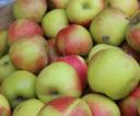 jablka_za_darmo_15