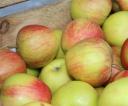 jablka_za_darmo_16