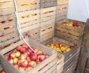jablka_za_darmo_18