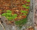 jesien7