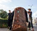 Pomnik niszczenia przyrody (1)