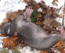 2-martwy-niedzwiadek