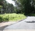 droga-obok-sosenek-3