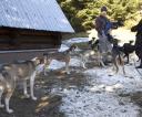 Wyścigi psich zaprzęgów w Bystrem