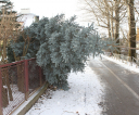 drzewo7