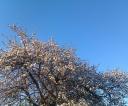 drzewo-chmura1a
