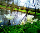 wiosenne-rozlewisko1a