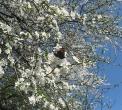 rusalka_-pawik_-w_-powodzi_-kwiatow1