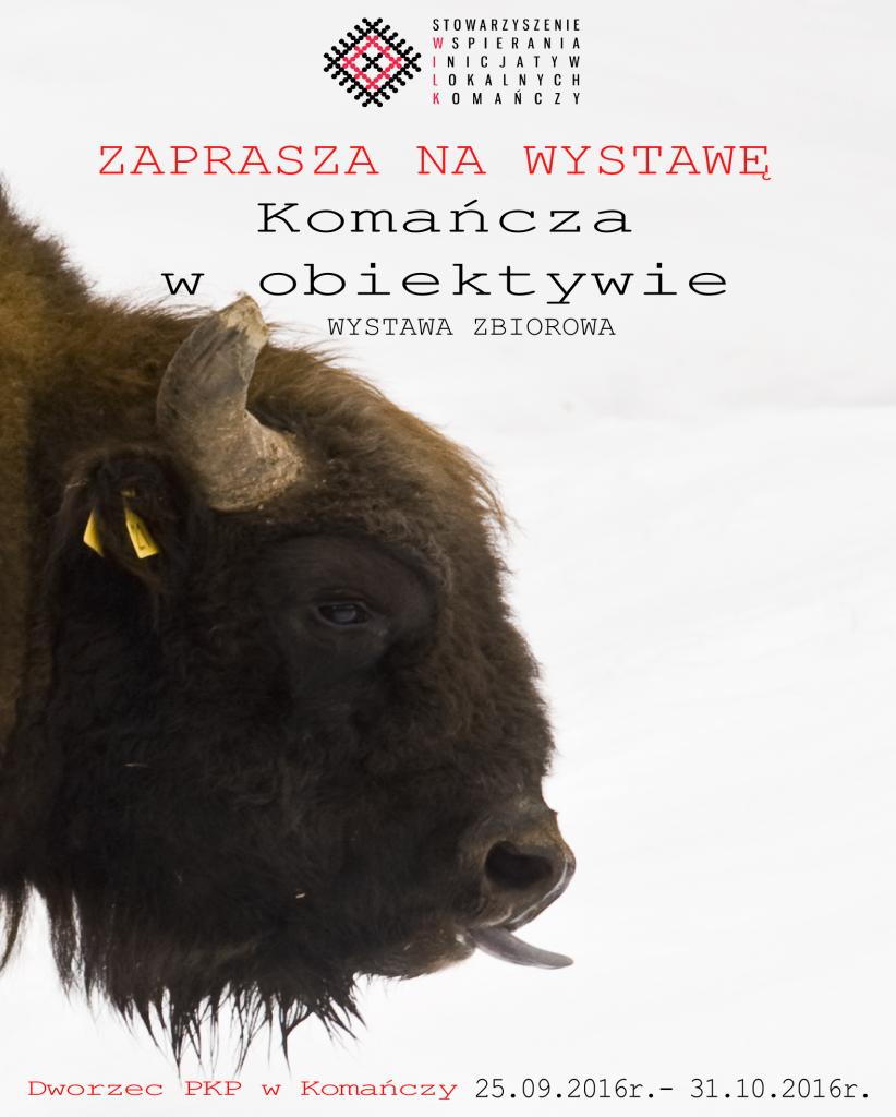 WILK_zubr