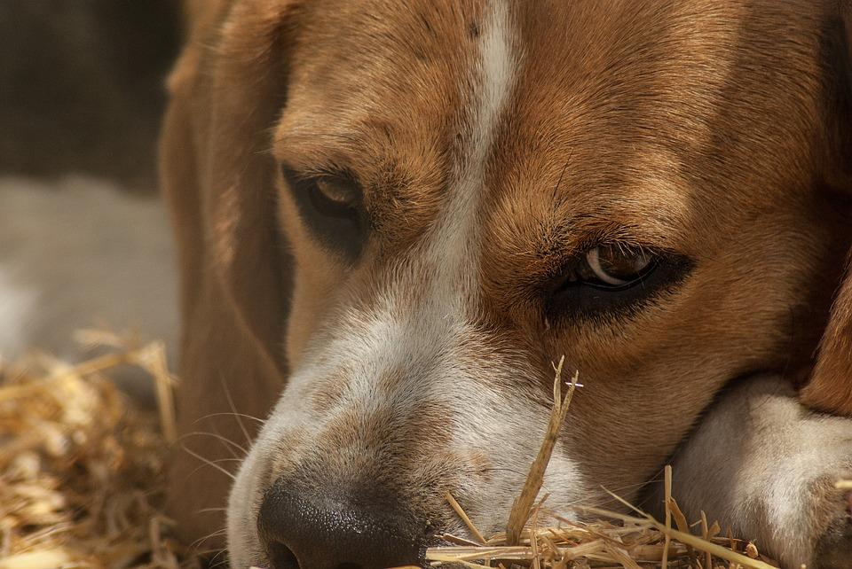 dog-1437526_960_720