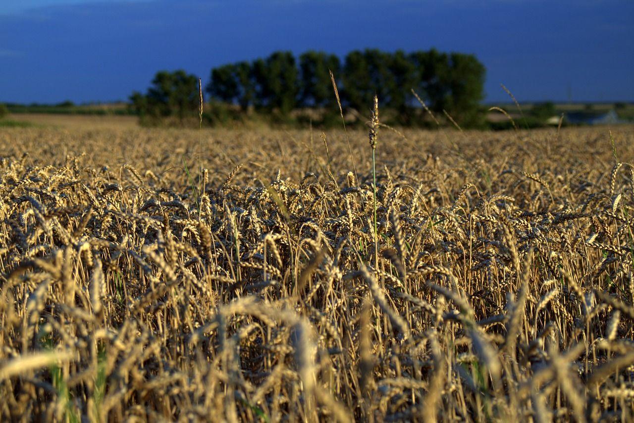 field-1534492_1280