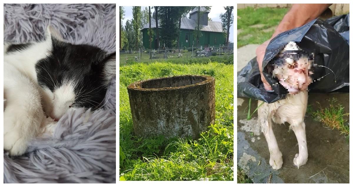 """dd63e41474f2de Lekarz weterynarii w opisie badania sekcyjnego napisał: """"U sekcjonowanego  kota stwierdzono: pofałdowanie naskórka opuszek, tzw. skóra praczek, ..."""