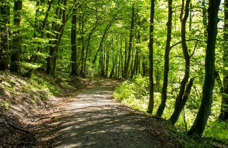 Forest, Idstein, 2014