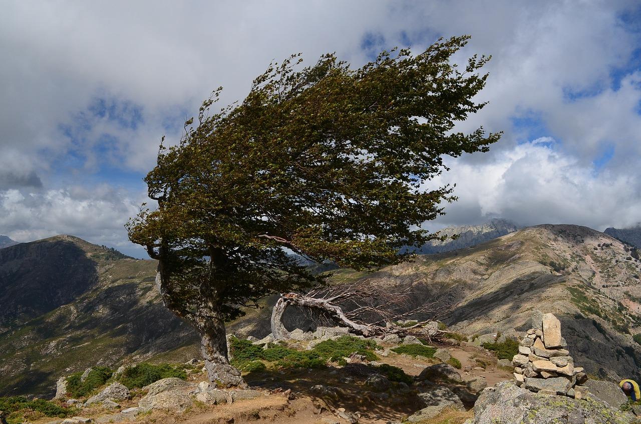 wind-953984_1280