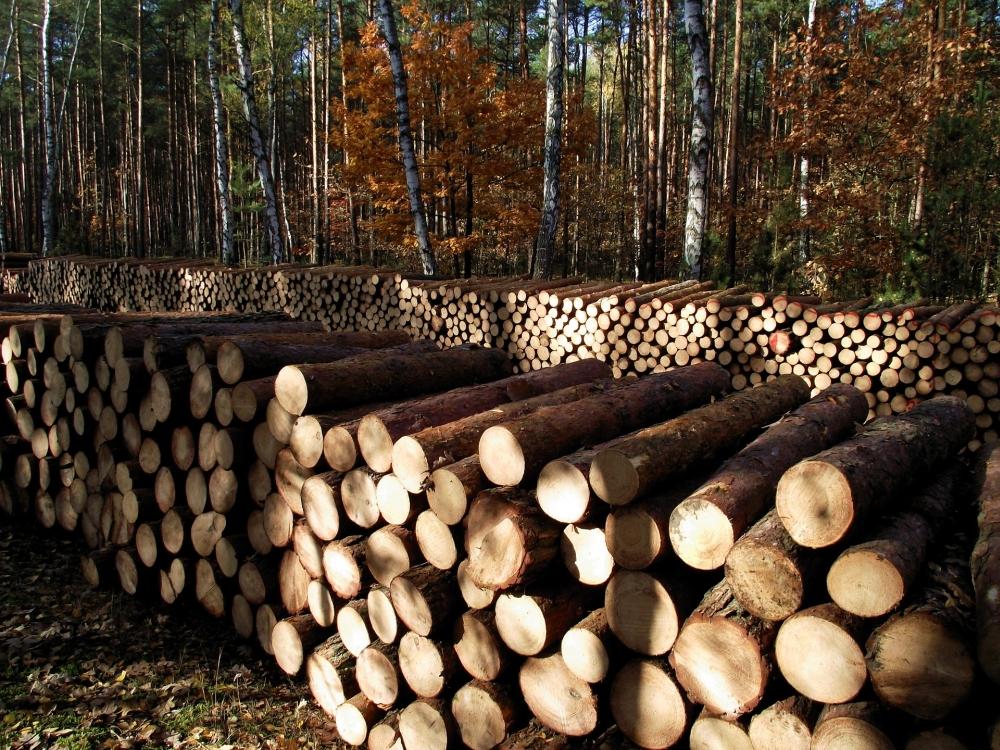 wood-1046998_1920