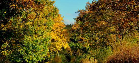 Bieszczady w barwach jesieni (ZDJĘCIA)