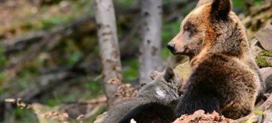 BIESZCZADY: Leśne macierzyństwo. Niesamowite nagrania! (VIDEO)
