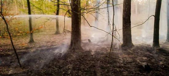 12 pożarów. Spłonęło 7 hektarów (FOTO)