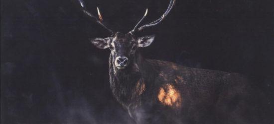 Zdjęcie jelenia w niesamowitej leśnej scenerii wygrało