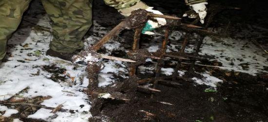 Brony w lesie, czyli zabójczych kolców ciąg dalszy (ZDJĘCIA)