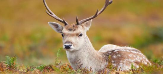 BIESZCZADY: Dwa zderzenia pojazdów z dzikimi zwierzętami w ciągu minionego tygodnia