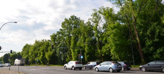 """SANOK INTERWENCJA: """"Blisko 90 drzew do wycięcia! To jest niepoważne!"""""""