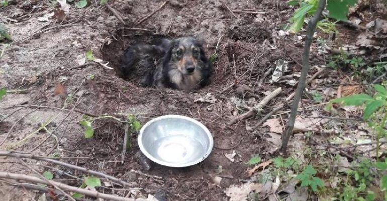 UDOSTĘPNIJ NA FACEBOOKU: Ktoś zakopał żywego psa! Sprawca poszukiwany (ZDJĘCIA)