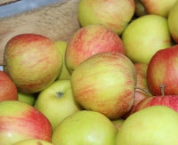 Jabłka dla mieszkańców Sanoka i okolic