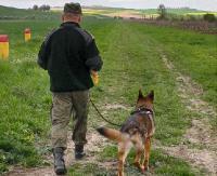 Nielegalnie przez zieloną granicę. Cudzoziemców wytropił pies (ZDJĘCIE)