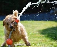 SANOK: Znika podatek od posiadania psów