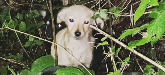 Psia rodzina porzucona w środku lasu… Szukają właściciela (ZDJĘCIA)