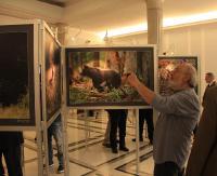 Bieszczady w Sejmie. Wystawa pokazuje przyrodnicze bogactwo lasów Podkarpacia (ZDJĘCIA)