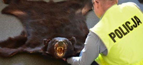 PODKARPACIE. Chciał sprzedać skórę z niedźwiedzia! Grozi mu 5 lat więzienia