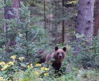 Spotkanie z niedźwiedziem twarzą w twarz (FILM)