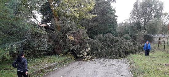 Powalone drzewa, wyrwana brama, brak prądu. 40 interwencji strażaków (ZDJĘCIA)