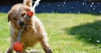 SPGK: Przerwa w dostawie ciepłej wody