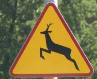 Wałęsające się psy i dzikie zwierzęta pod kołami samochodu. Jesienią bądźmy bardziej czujni na drodze