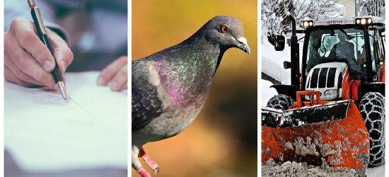 Zimowe utrzymanie dróg, gołębie, list do prezydenta (VIDEO)