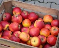 PIĄTEK: Darmowe jabłka i soki jabłkowe dla mieszkańców Sanoka i okolic!