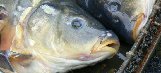 Kontrola łowisk. Wędkarz przekroczył limit