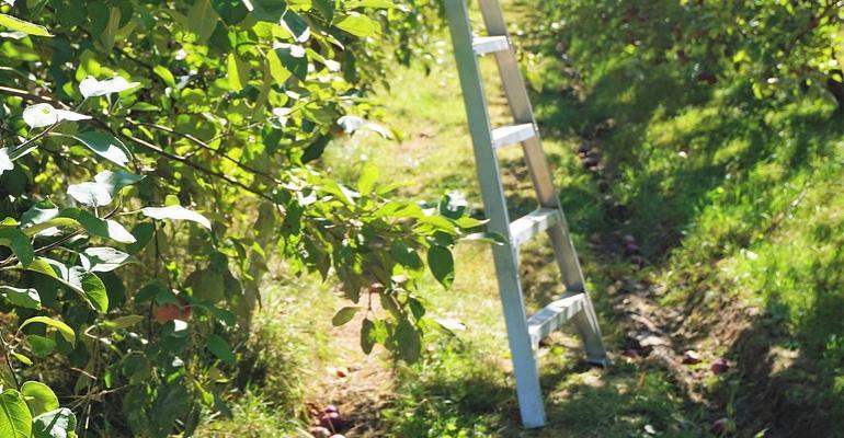 Spadł z drabiny podczas prac w ogrodzie