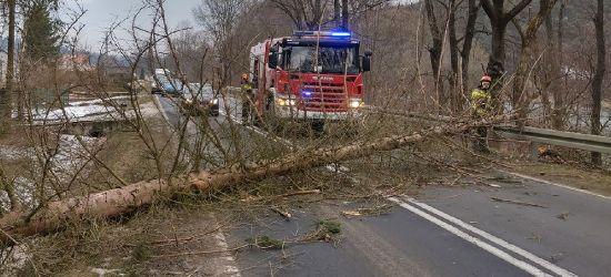 Krok od tragedii. Drzewo spadło tuż przed samochód! (ZDJĘCIA)