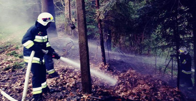 ZAGÓRZ: Pożar suchych traw i zakrzaczeń tuż przy lesie (ZDJĘCIA)