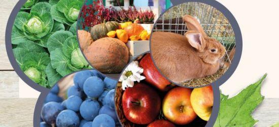 5-6 PAŹDZIERNIKA: Targi innowacji, giełda ogrodnicza, święto winobrania!