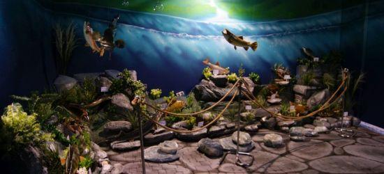 Muzeum Złotej Rybki już otwarte (FOTORELACJA)