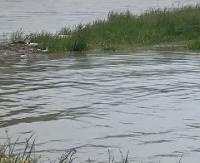 Gwałtowne wzrosty poziomu wód. Komunikat hydrologiczno-meteorologiczny