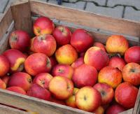 Długa majówka. Jest czas odebrać darmowe jabłka